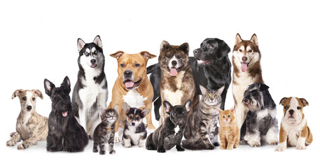 Group of dogs and cats  sitting in front of a white background.