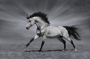 Fotoväggar - Chestnut horse in motion