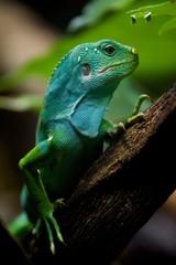 Fiji iguana in profile on tree branch