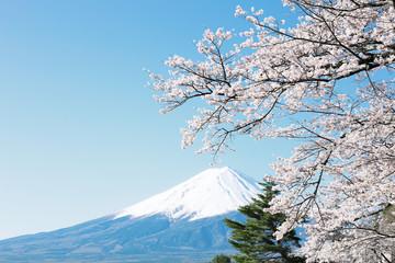 富士山と桜の風景
