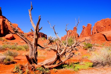 Fototapete - Arches National Park, USA, view of Park Avenue with dead wood