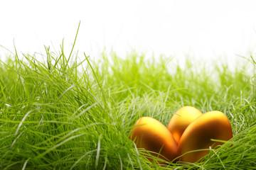 Golden eggs on grass