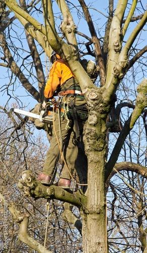 lagage d 39 un arbre b cheron en action photo libre de droits sur la banque d 39 images fotolia. Black Bedroom Furniture Sets. Home Design Ideas