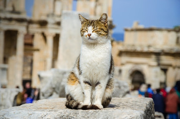 The cat is sitting on the ruins