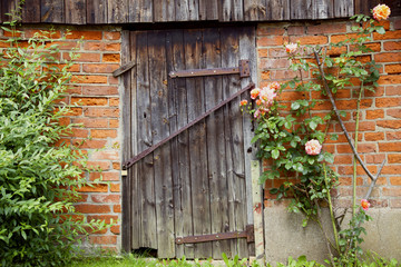 Alter Schuppen mit einer Holztür und Rankrosen