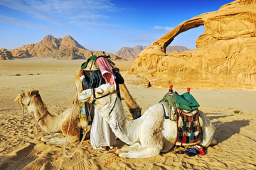 Bedouin man and his camels in the desert of Wadi Rum
