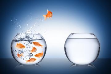 Fototapete - fish courage concept