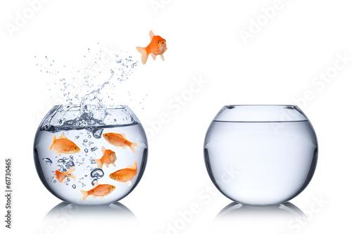 Fototapete fish courage concept