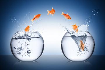 Fototapete - fish change concept