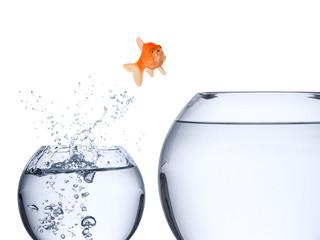 Fototapete - fish rise concept