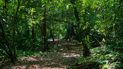 Footpath into the jungle with dense vegetation