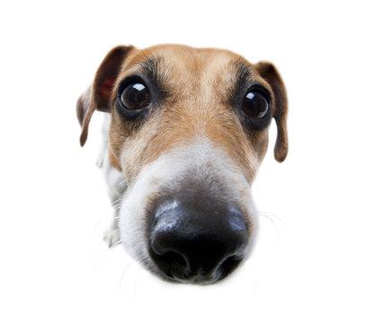 Funny dog big nose