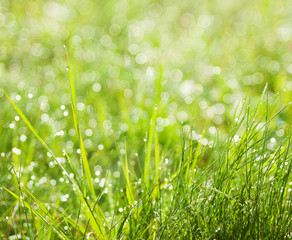 Fresh spring grass  on natural defocused  background.