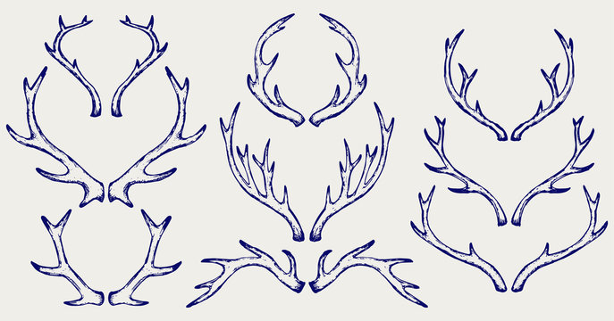 Deer horns. Doodle style