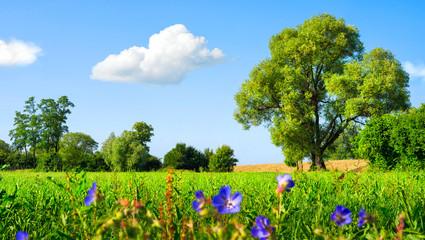 Fotoväggar - Idyllische Wiesenlandschaft bei schönstem Wetter