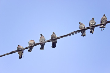 Pigeons on an electric wires over sky