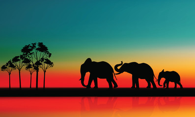 Mother with Baby Elephants Walking