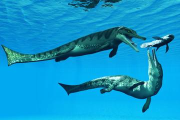 Metriorhynchus Aquatic Reptiles