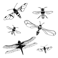 Collection of  dragonfly and bee. Vector illustration/ EPS 8