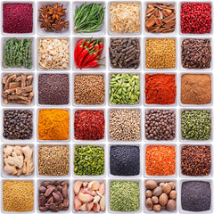 Fototapete - collection of different spices and herbs