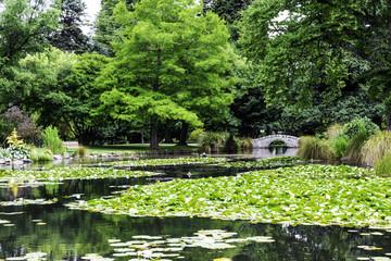 Queenstown Gardens in New Zealand, South Island