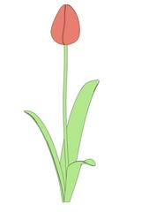 cartoon image of tulip flower