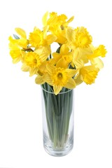 Daffodils in a glass vase on a white background