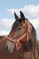 Horse on the farm portrait full