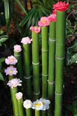 Bambus und Kamelienblüten