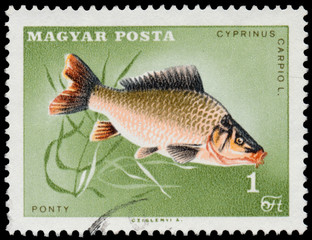 HUNGARY - CIRCA 1963: A stamp printed in Hungary Showing fish, c
