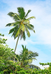 high palm on background of blue sky