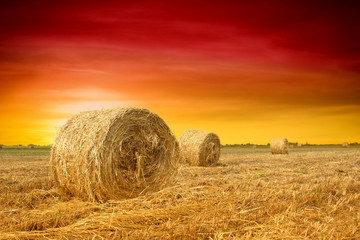 Foto op Plexiglas Rood traf. Hay bale in the countryside