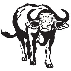 african buffalo black white