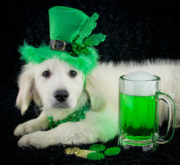 Wall Mural - St. Patrick's Day Puppy