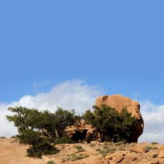 Rocher à Tafraout