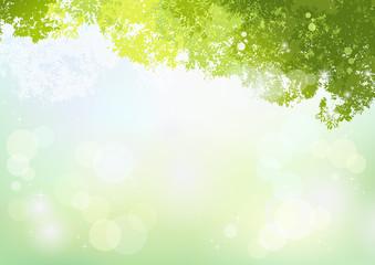 背景 新緑 自然 春 初夏 Spring Green background with soft sunlight