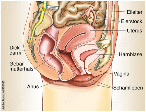 Aufbau und Funktion der weiblichen Geschlechtsorgane : Apotheke