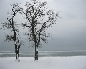Landscape. Two lonely trees on the shore of the frozen sea