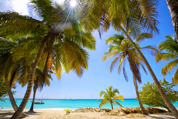 Tropical sand beach with palm trees, Dominican Republic Wall mural