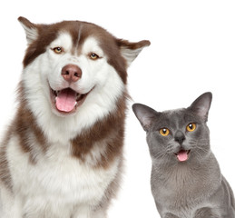 Wall Mural - Happy pets on white background