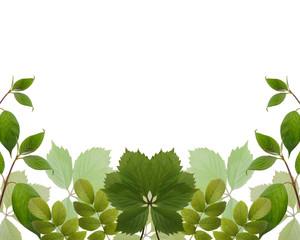 garden leaves on white background