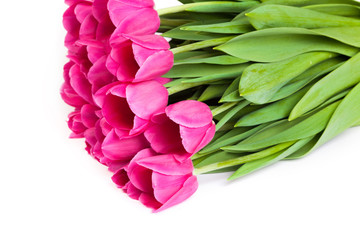 Bunch of tulips on a white