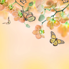 Tuinposter Vlinders Floral background of tropical orchids and butterfly