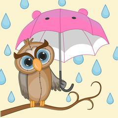 Owl with umbrella