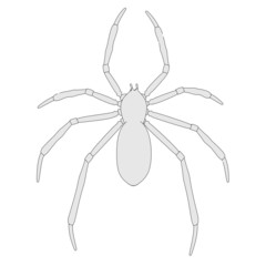 cartoon image of spider animal