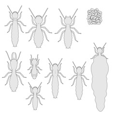 cartoon image of termite ants