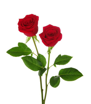 two red rose