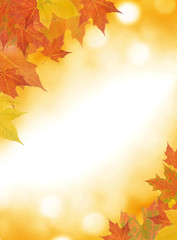 Autumn leaf background with room for copy space.