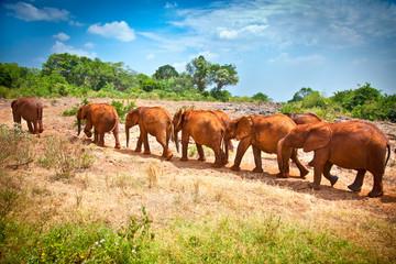 Staande foto Zuid Afrika Herd of baby elephants , Kenya.
