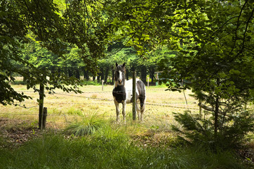 Horse behind barbed fence